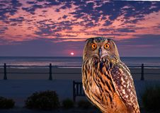 An owl at an early morning Stock Photos