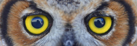 Owl eye. Close up shoot of owl eye Stock Photography