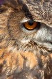 Owl Eye. Sharp eye from a vigilant owl Royalty Free Stock Photos
