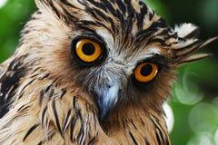 Owl eye. Close-up shot of owl's eye Royalty Free Stock Photos