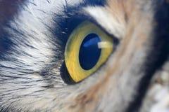 Owl Eye Fotografia Stock Libera da Diritti