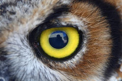 Owl eye Stock Photography