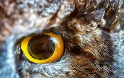 Owl Eye Fotografie Stock Libere da Diritti