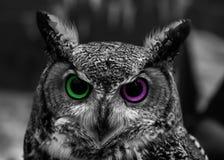 Owl Eye Two Color abstracto Fotografía de archivo