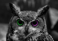 Owl Eye Two Color abstrait Photographie stock