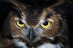 Owl Eyes. With slow exposure and flash Stock Photos
