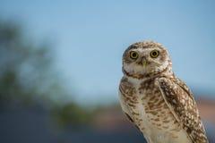 Owl Eyes Royaltyfri Fotografi