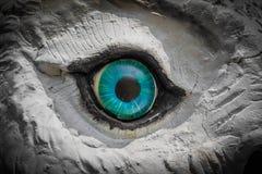 Owl Eyes Staring Imagem de Stock Royalty Free