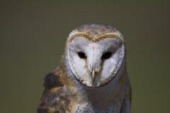 owl för 2 ladugård Arkivbild