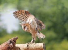 owl för 67 ladugård Royaltyfri Foto