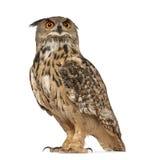owl för buboörneurasian Arkivfoto