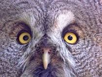 Owl face. In close-up composition stock image