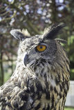 Owl falconry Royalty Free Stock Images