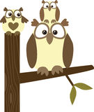Owl Family. New Zealand owl in front of a white background royalty free illustration