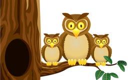 Owl family Royalty Free Stock Photos