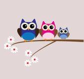 Owl Family Lizenzfreie Stockfotografie