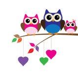 Owl Family Foto de Stock