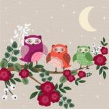 Owl Family Royaltyfri Fotografi