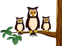 Owl family cartoon Royalty Free Stock Image
