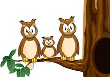 Owl family cartoon Stock Photography