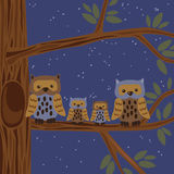 Owl Family on the Tree Royalty Free Stock Photography