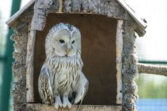 Owl at the farm. Owl in the house at the farm Stock Images