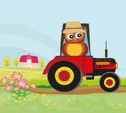 Owl Farmer Stock Images