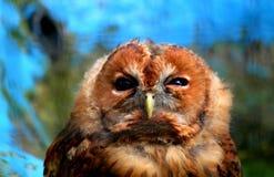 Owl, Fauna, Beak, Bird stock image