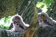 Owl, Fauna, Bird, Bird Of Prey stock images