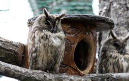 Owl, Fauna, Bird Of Prey, Beak Stock Photos