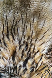 Owl Feathers Texture stock foto