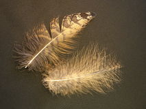 Owl feathers Royalty Free Stock Photos