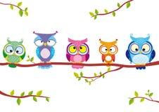 owl fem Arkivfoto