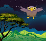 An owl flying in the middle of the night Stock Image