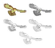 Owl, flying night bird. Illustrations in several variants for your selection. Black and white, color, ability to change colors. Suitable for a coloring book Stock Images