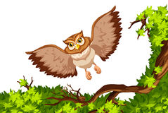Owl flying over the tree Stock Photography