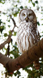 Owl in forest Royalty Free Stock Photos
