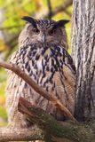 Owl in forest stock photography