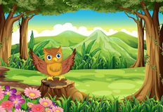 An owl at the forest standing above the stump Royalty Free Stock Photo