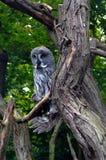 Owl, friendly animals at the Prague Zoo. Stock Photo