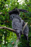 Owl, friendly animals at the Prague Zoo. Royalty Free Stock Photos
