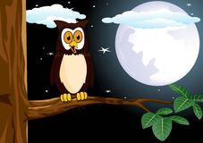 Owl with the full moon Stock Image