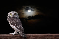 Owl and full moon. Royalty Free Stock Photos
