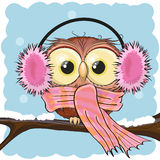 Owl in a fur headphones Stock Images