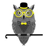 Owl in glasses sitting on walking stick Royalty Free Stock Image