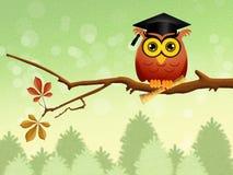 Owl graduate on branch Stock Photos
