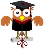 Owl the graduate Royalty Free Stock Images
