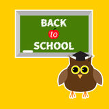 Owl in graduate hat academic cap and green board Royalty Free Stock Photography