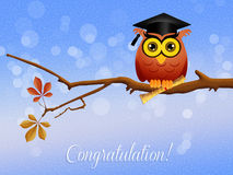 Owl graduate Stock Photo