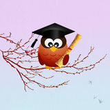Owl graduate Royalty Free Stock Photos